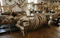 Зоологічний музей ЛНУ ім. І.Франка|Дозвілля